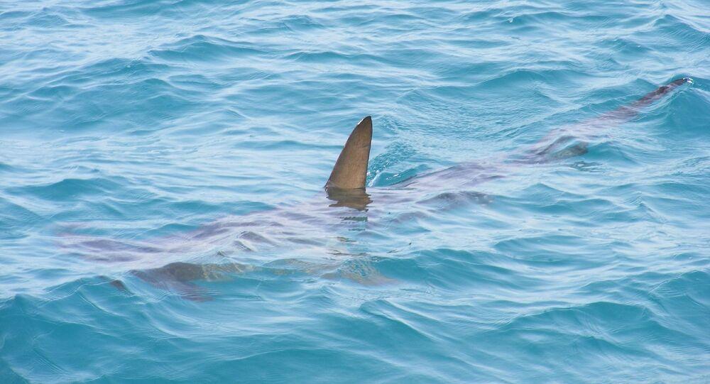 Un requin (image d'illustration)