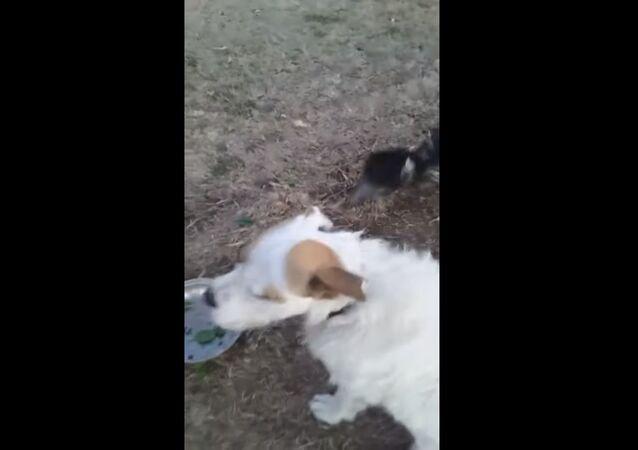 Emu Plays With Pup || ViralHog