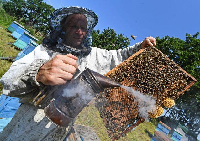 Un apiculteur (image d'illustration)