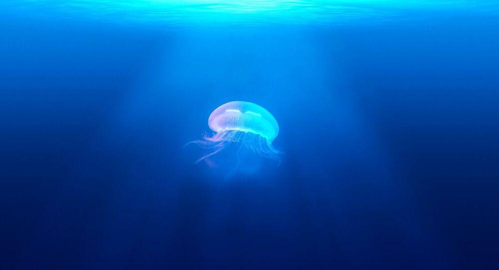 méduse (image d'illustration)