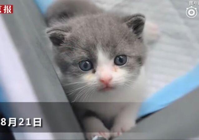 Garlic, le premier chaton cloné en Chine