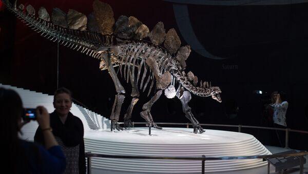 Les restes d'un stégosaure dans le Natural History Museum à Londres - Sputnik France