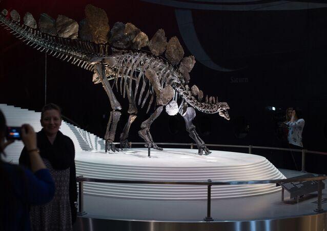 Les restes d'un stégosaure dans le Natural History Museum à Londres