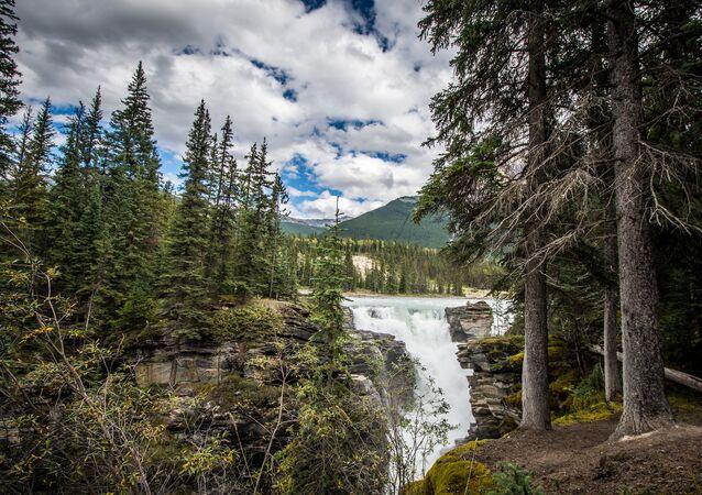 un forêt canadienne