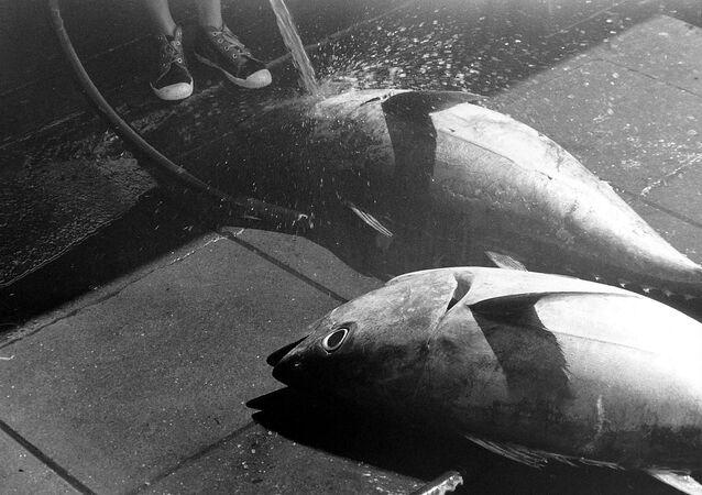 Un poisson (image d'illustration)