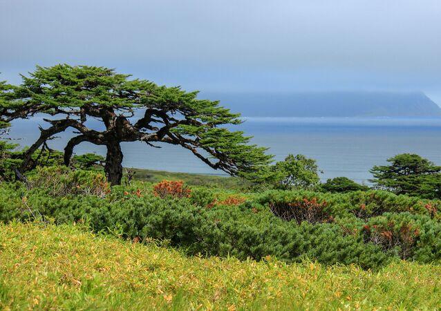L'île Itouroup des îles Kouriles