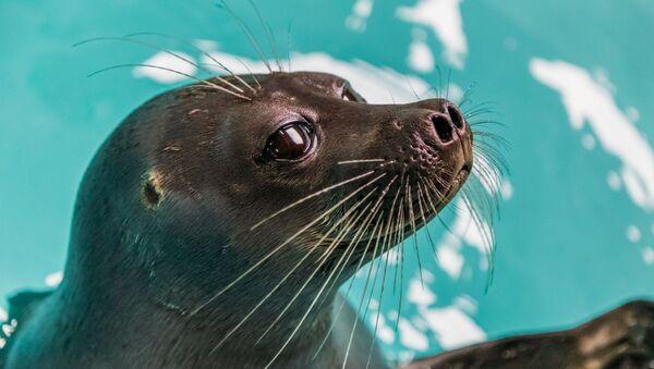 Au bord de l'extinction: 10 animaux protégés du Livre rouge de la Russie  - Sputnik France