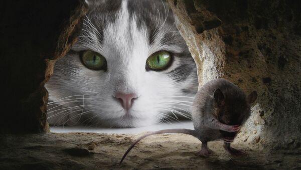 un chat et un rat - Sputnik France
