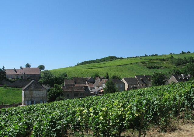 Un vignoble de Bourgogne