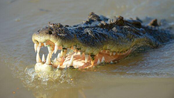 Крокодил - Sputnik France