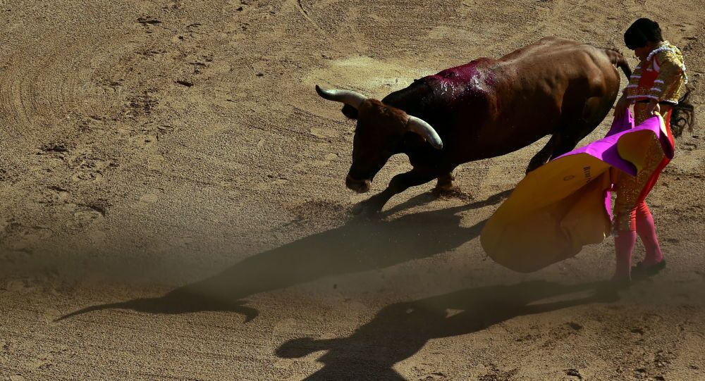 Un taureau