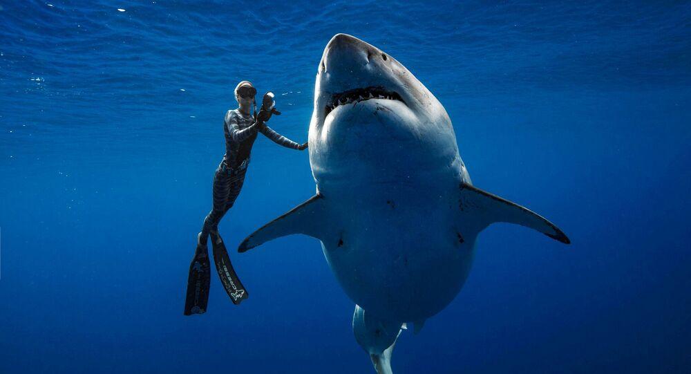 Ocean Ramsey et un requin blanc