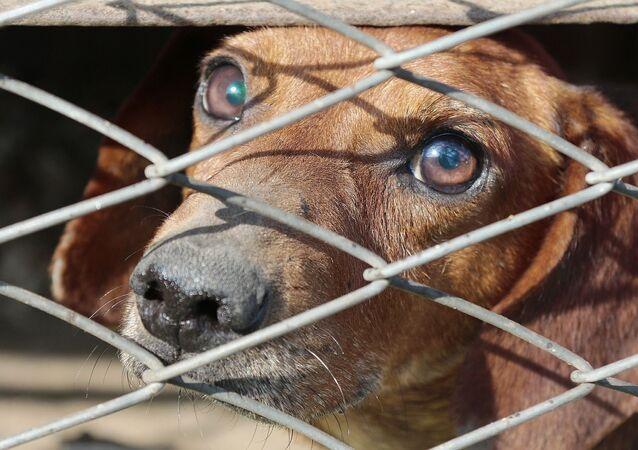 un chien dans une cage (image d'illustration)