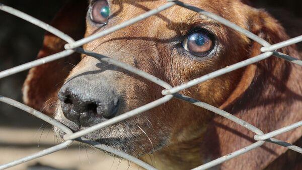 un chien dans une cage, image d'illustration - Sputnik France