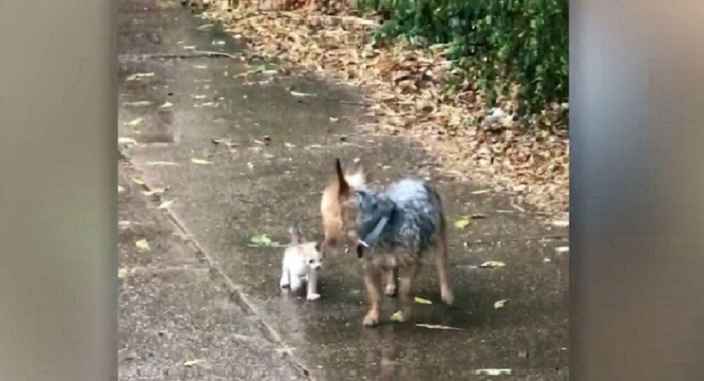 Quand un chien au grand cœur sauve un chaton de l'averse