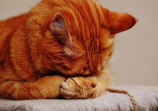 Un chat roux, image d'illustration