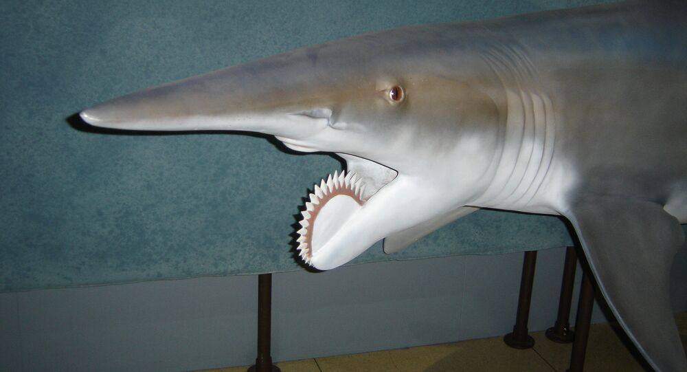 Helicoprion