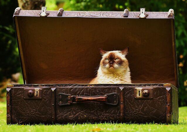 Un chat dans une valise