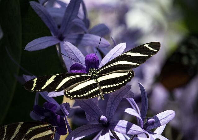 Papillon (image d'illustration)