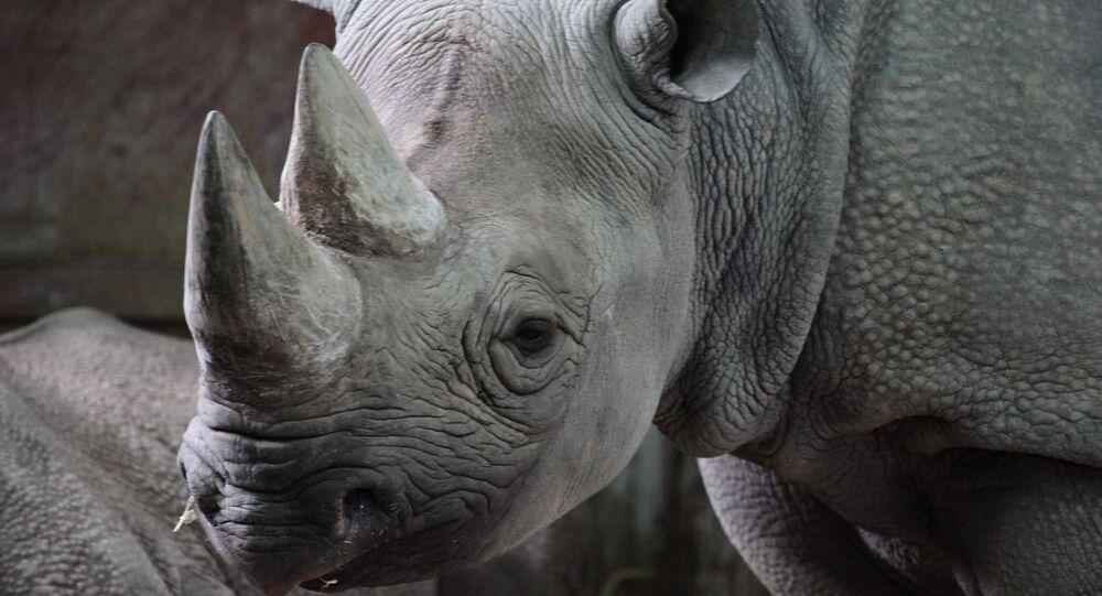 Rhinocéros, image d'illustration