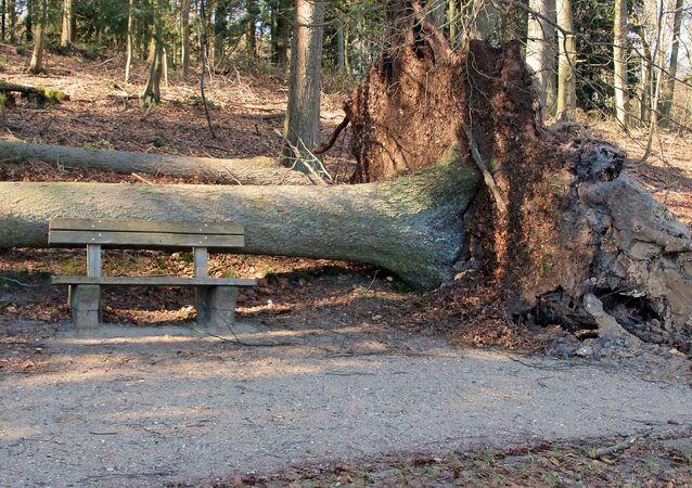 Un arbre tombé (image d'illustration)