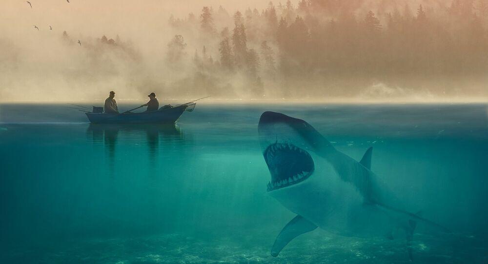 Requin (image d'illustration)