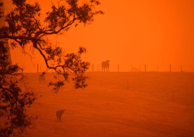 Le ciel de couleur rouge provoqué par des feux de forêts en Australie, dans l'état de la Nouvelle-Galles du Sud, le 5 janvier 2020