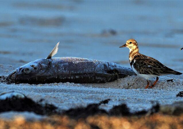 Un poisson sur une plage