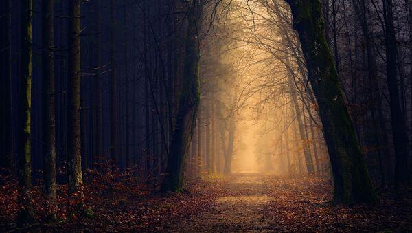 forêt (image d'illustration) - Sputnik France