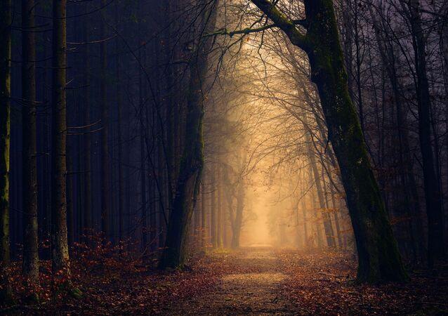 forêt (image d'illustration)