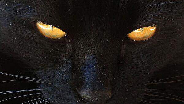 Un chat noir - Sputnik France