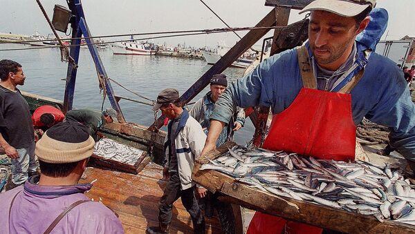 Une journée de pêche au port de Bouharoune (Algérie). - Sputnik France