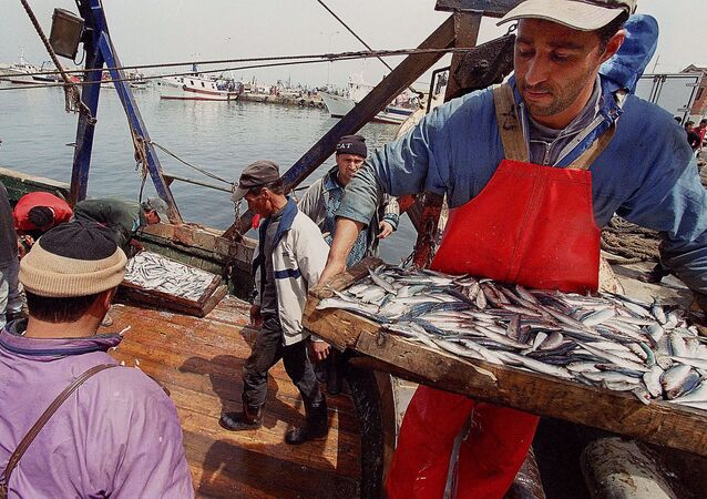 Une journée de pêche au port de Bouharoune (Algérie).