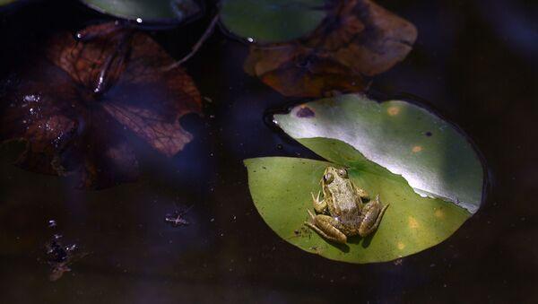 Une grenouille très heureuse prend une douche en Australie - Sputnik France