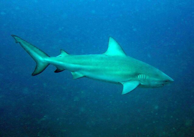 Un requin, image d'illustration