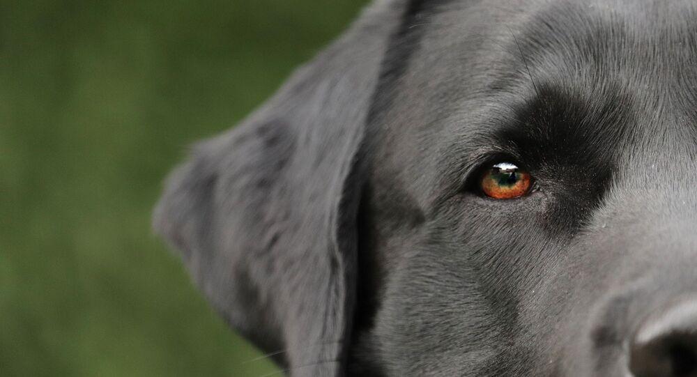 Un chien, image d'illustration