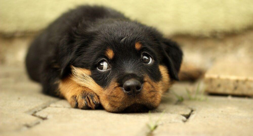 Un chiot triste