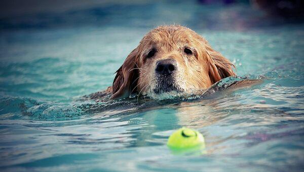 Un chien dans l'eau - Sputnik France