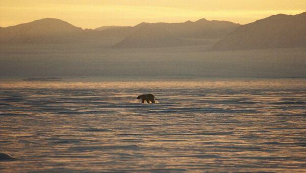 Un ours polaire sur la côte est du Groenland. - Sputnik France