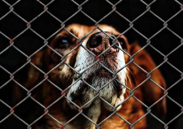 Un chien dans un refuge (image d'illustration)