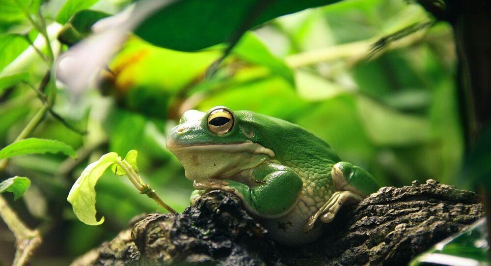 Une grenouille, photo d'illustration