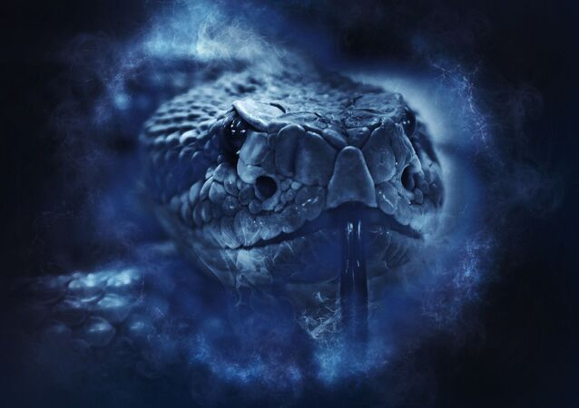 Un serpent (image d'illustraiton)