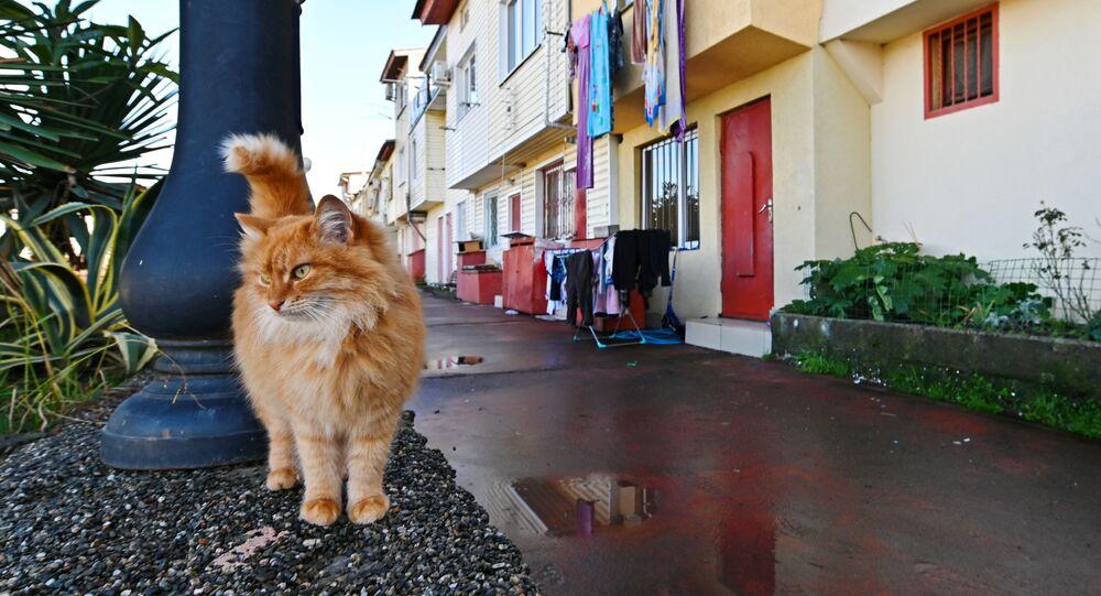Voilà un chat acrobate: en Italie, ce félin coincé sur un toit a été sauvé