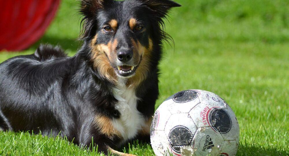 Un chien et un ballon