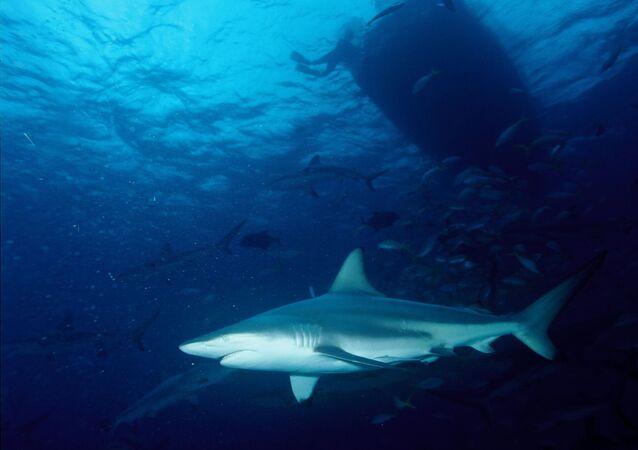 Un requin bordé