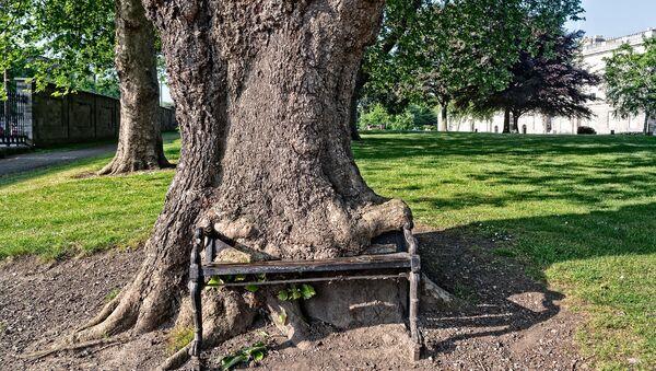 Un «arbre affamé»  à Dublin - Sputnik France