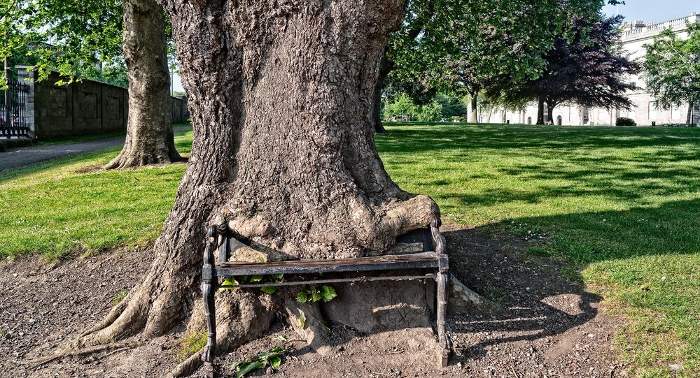 Un «arbre affamé»  à Dublin