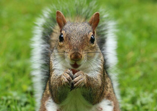 écureuil, image d'illustration