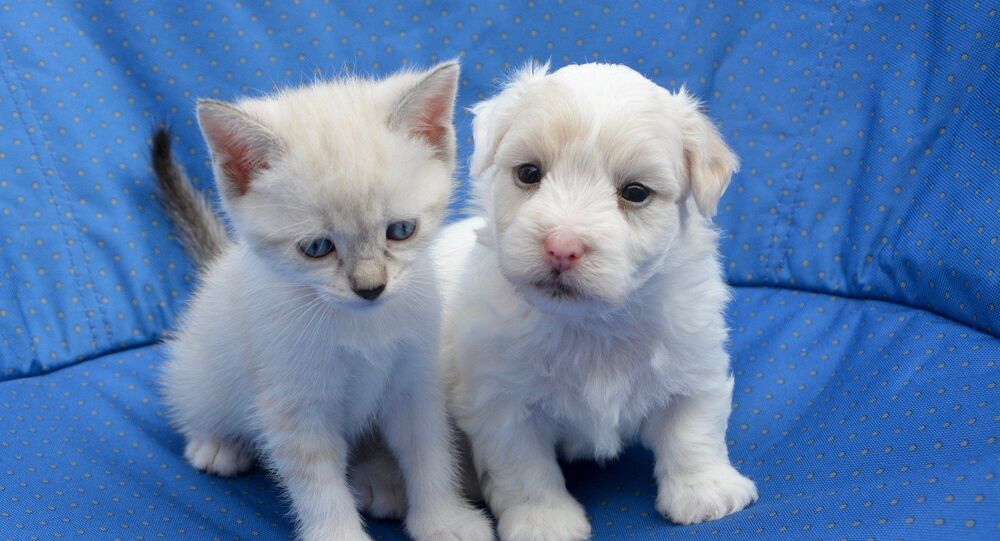 Un chaton et un chiot
