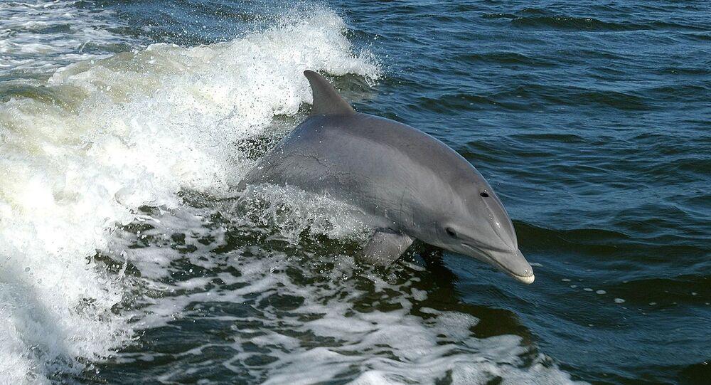 Un dauphin